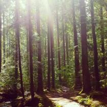 Schwäbisch-Fränkischer-Wald3