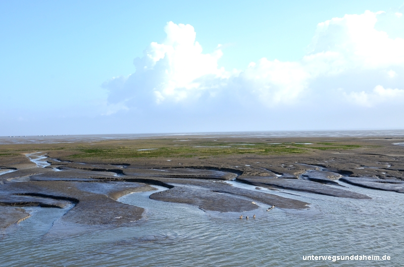 Zugvogeltage auf Spiekeroog - hinaus aufs Wattenmeer zu den Seehunden