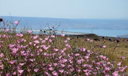 Arbel Nationalpark See Genezareth
