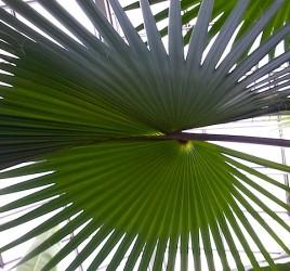 Palmengarten Frankfurt
