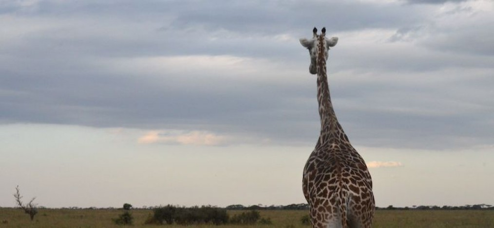Tansania & Sansibar Reise