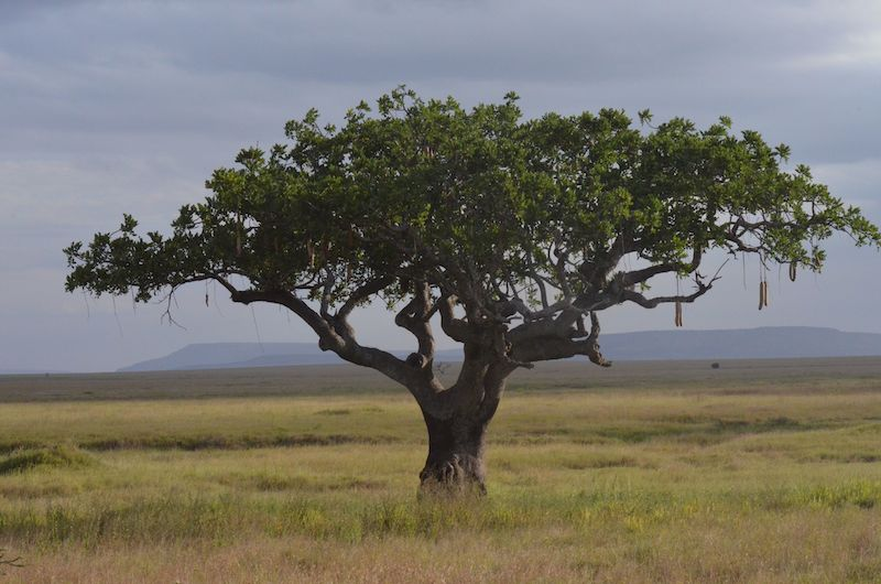 Safari in der Serengeti Nationalpark