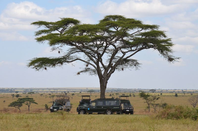 Safari in der Serengeti