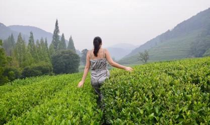 China - Hangzhou Teeplantage