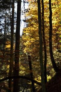 Herbstlichter unterwegsunddaheim.de
