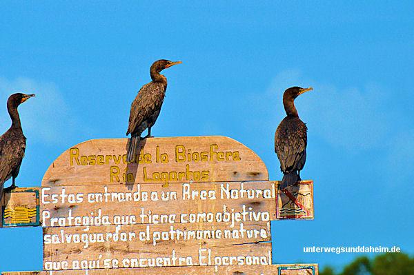 unterwegsunddaheim.de_mexiko-riolagartos11
