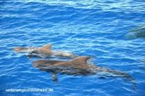 unterwegsunddaheim.de_lagomera_wale+delfine4jpg