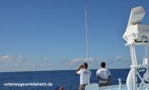 unterwegsunddaheim.de_wale+delfine1