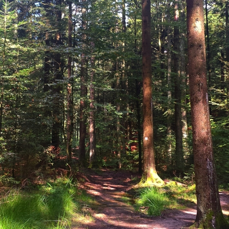 Schwäbisch-Fränkischer-Wald-Gallenklinge