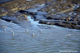 Zugvogeltage und Seehunde auf Spiekeroog