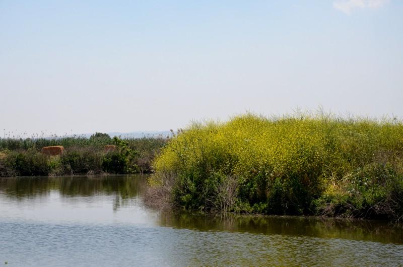 Hula Naturreservat am See Genezareth
