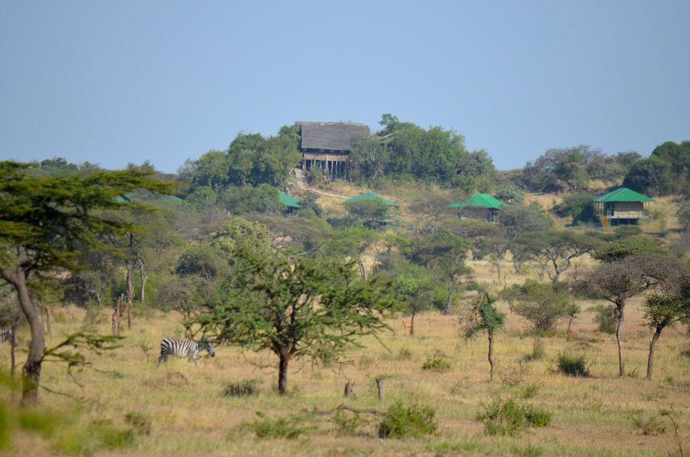Die Große Tierwanderung in der Serengeti in Tansania - Gnuwanderung Zebrawanderung
