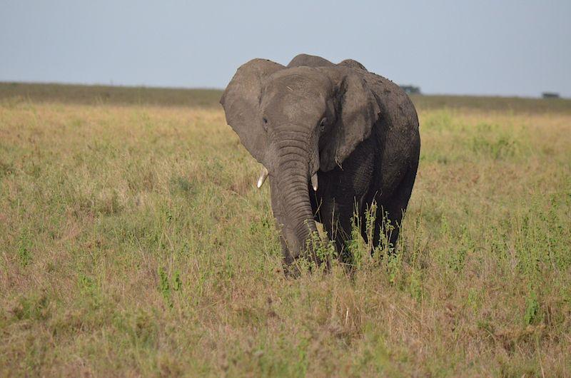 Safari in der Serengeti Nationalpark