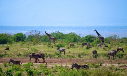 Safari im Lake Manyara Tansania