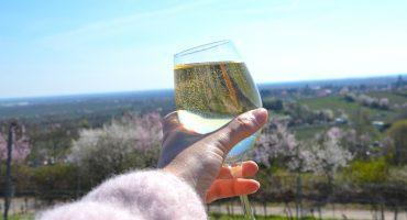 Mandelblütenfest in Gimmeldingen in der Pfalz