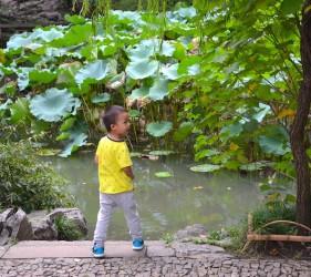 Garten des bescheidenen Beamten Suzhou - klassische Gärten Suzhou