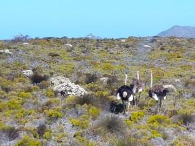 Kap der Guten Hoffnungen im Table Mountain Nationalpark