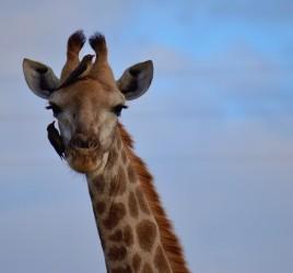 Krüger Nationalpark Südafrika