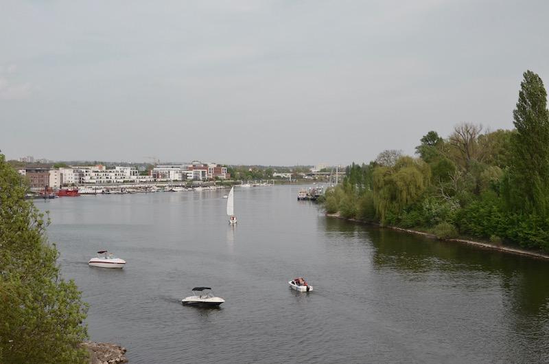 Kirschblüten Wanderung Schiersteiner Ufer