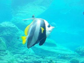 ushaka Aquarium Durban