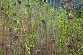iSimangaliso Wetland Park Südafrika