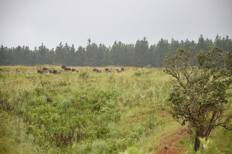 Königreich Eswatini bzw. Swasiland