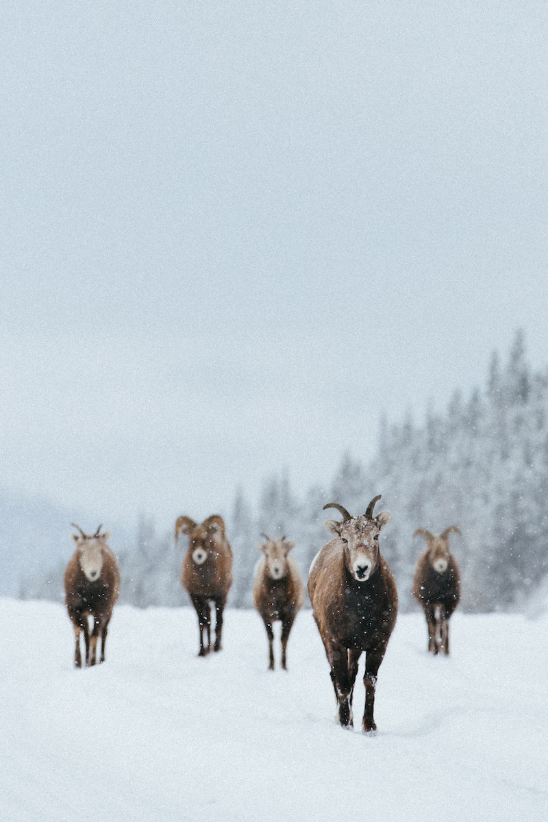 Jasper Nationalpark Rocky Mountains Winter