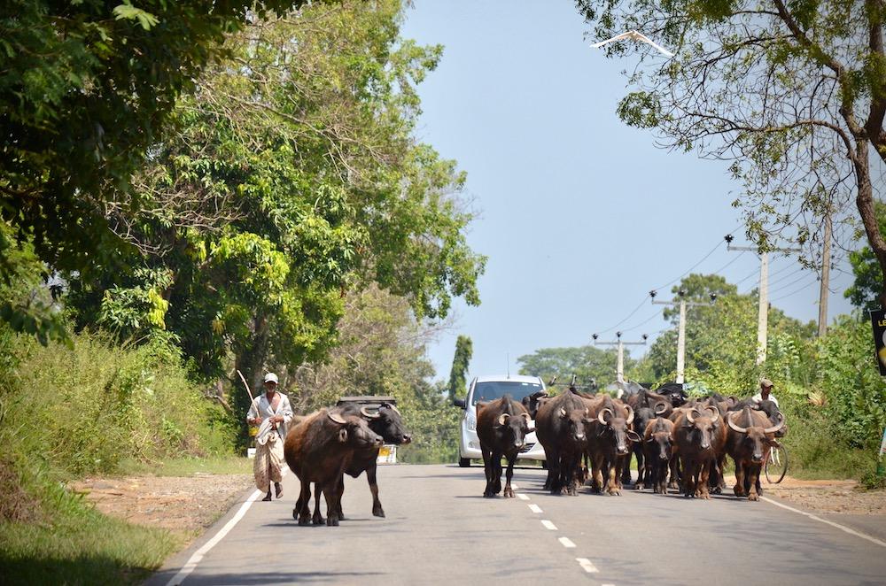 Sri Lanka Visum