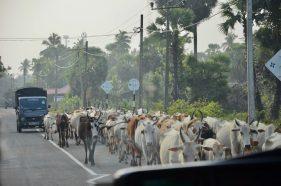 Trincomalee Ostküste Sri Lanka