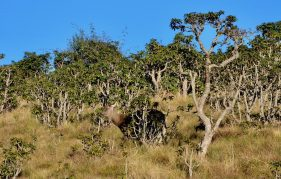 Horton Plains Nationalpark