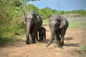 Udawale Nationalpark Safari