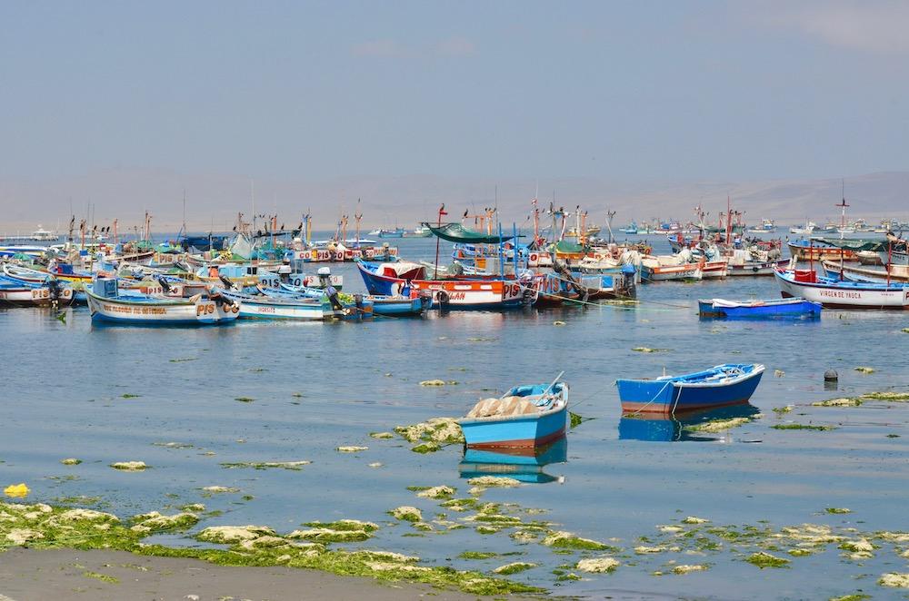 Marina Paracas