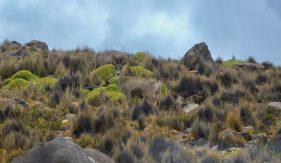 Naturreservat Salinas Aguada Blanca